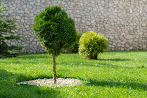 landscaping-lawn-services